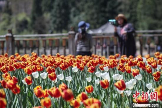 贵州龙里天气晴好游客走进公园乐享周末时光
